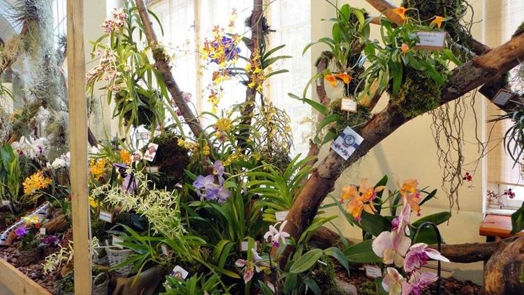 orchideakiállítás2